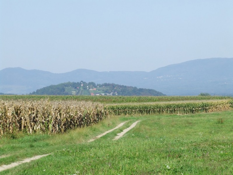 Figure 4. The hillfort at Kučar, Slovenia, sits within a concentration of Early Iron Age burial mounds, many of them marking the edges of routeways: this view is taken from an area of potentially contemporary lowland settlement at Griblje (photograph: I. Armit).